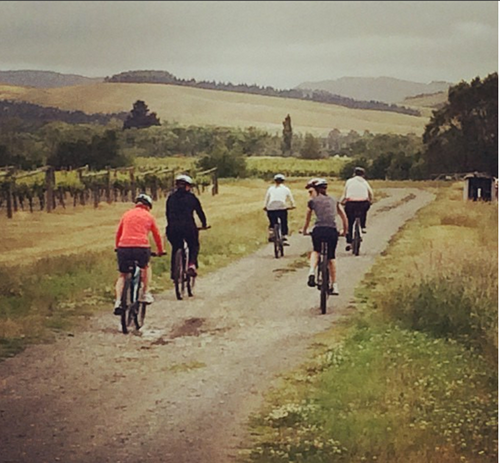 new zealand wine tours by bike