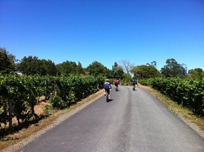 Cycling in the vines in Martinborough.